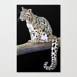 Clouded Leopard Canvas Print