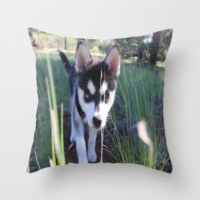 Koa On The Hunt Throw Pillow By Nicolettehand