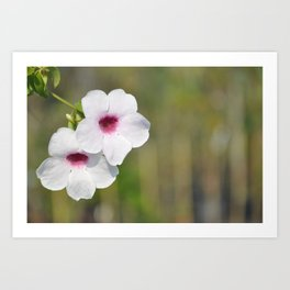 White and Pink Fine Art Photography Art Print