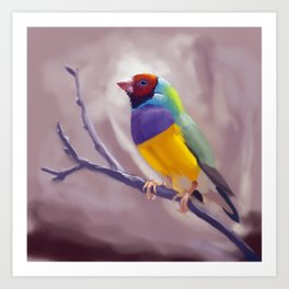 Gouldian Finch Art Print