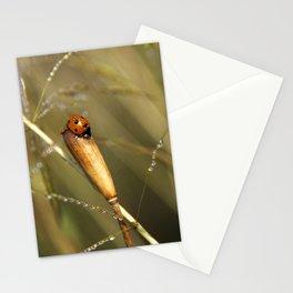 Morning Dew On Lady Bird Stationery Cards