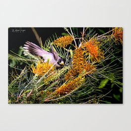 Dropping In For Lunch Canvas Print