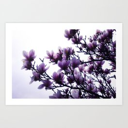 Magnolia Dreams Art Print