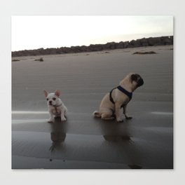 Pug and Frenchie at the Beach  Canvas Print