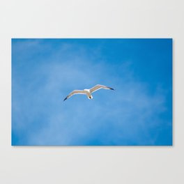 Great Black-backed Gull - blue sky 44 Canvas Print