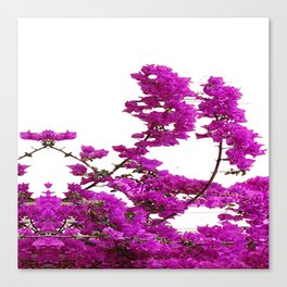 LILAC PURPLE BOUGAINVILLEA VINES CLIMBING ON WHITE Canvas Print