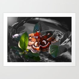 """""""As Daylight Ends"""" - Cecropia Moth Painting Art Print"""
