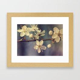 Cherry blossom tree in the blue Framed Art Print