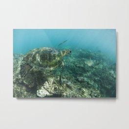 Turtle à Honolua bay Metal Print