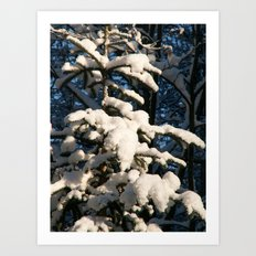 Covered Art Print