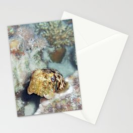 Baby Cuttlefish and Hard Coral Stationery Cards