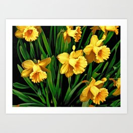 Bouquet Of Golden Spring Daffodils Art Print