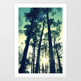 Towering Pines Art Print