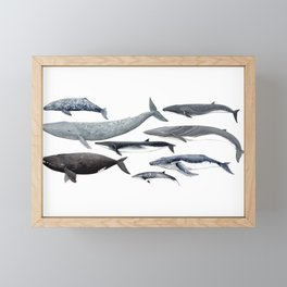 Whales and right whale Framed Mini Art Print