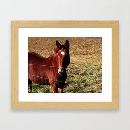 Pretty Horse Framed Art Print