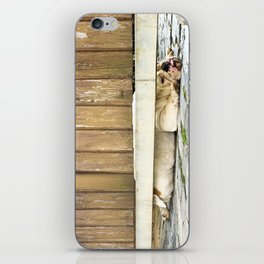 Bored Bulldog And Yard Gate iPhone Skin