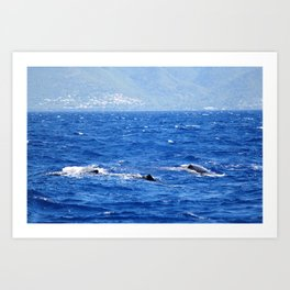 Whale Watching in the Caribbean Art Print