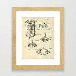 Vintage Human Vertebrae Anatomy Print Framed Art Print
