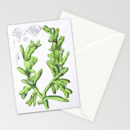 Mesembryanthemum Cryptanthum Stationery Cards