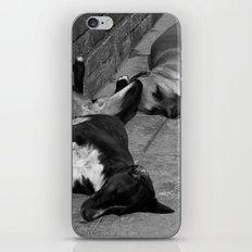 Greek Dogs iPhone & iPod Skin