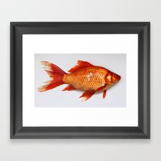 Red Gold Fish Framed Art Print