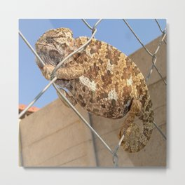 Chameleon In Shades of Brown on Fence Metal Print