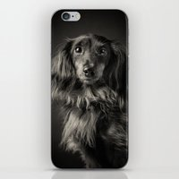 waldo iPhone & iPod Skins featuring Family Dog - Waldo the Shy Dog by Isaloha Photography