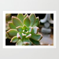 succulent Art Prints featuring Succulent by Wandering Star Trails