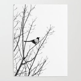 Magpie in the trees Poster