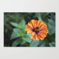 rileigh smirl Canvas Prints featuring Orange and Pink by Rileigh Smirl