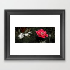 Red Poppy Framed Art Print