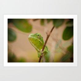 Green Chameleon Art Print
