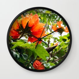 The beautiful red flowers of the African Tulip Tree Wall Clock