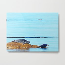 Seal, Pup and Eider Duck Metal Print