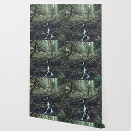 California Redwood Rainforest - Nature Photography Wallpaper