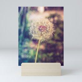 Dandelion Seedhead - Nature Photography Mini Art Print