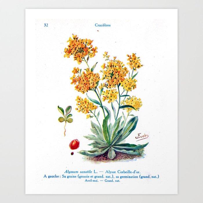 J Eudes - Alysse - vintage botanical print Art Print by dejavustudio