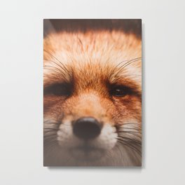 Red fox 2 Metal Print