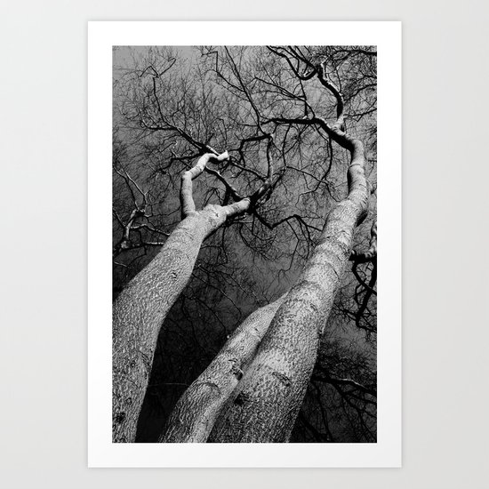 Monochrome Trees Art Print