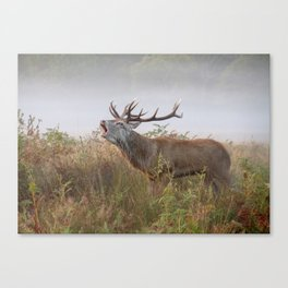 Rutting Season - Richmond Park Canvas Print