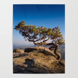 Crooked Tree in Elbe Sandstone Mountains Poster