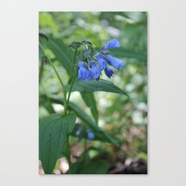 Blue Wildflower (2) Canvas Print