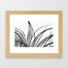Plume- A Feather Study 1 Framed Art Print