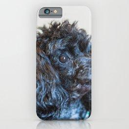 Classic poodle iPhone Case