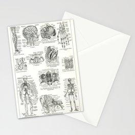 Meyer's Blitz-Lexikon - German Visual Dictionary (1932) - Human Anatomy Stationery Cards