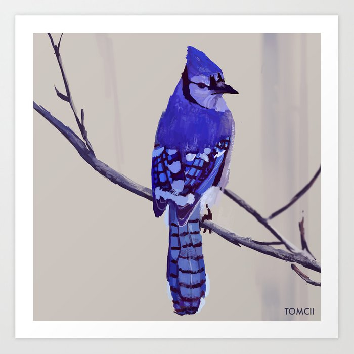 Blue Jay Bird Art Print