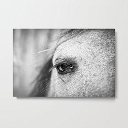 Soulful Horse Eye Photograph by Priya Ghose  Metal Print