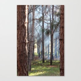 FOREST SUN BEAMS Canvas Print
