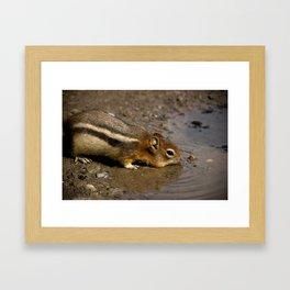 Chipmunk and Sanson's Peak Framed Art Print