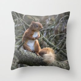 Cute little wild woodland red squirrel in the branches Throw Pillow